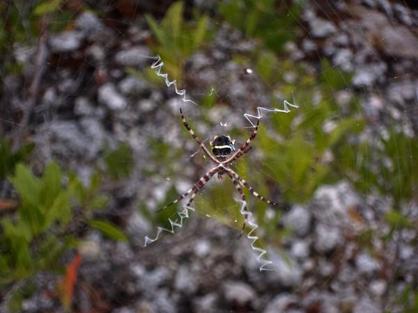 Grassy Key -> Big Pine Key